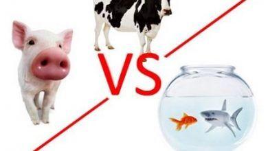 Photo of ¿Existen diferencias entre los diferentes tipos de colágeno que se comercializan en el mercado?
